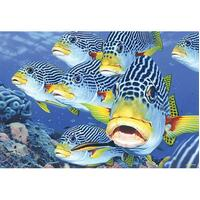 Blue Opal - Australian Geographic Oblique-Band Sweetlips Puzzle 1000pc