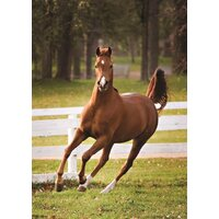 Jumbo - Playful Foal Puzzle 500pc
