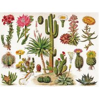 New York Puzzle Company - Cacti Puzzle 1000pc