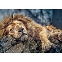 Trefl - Sleeping Lion Puzzle 1000pc